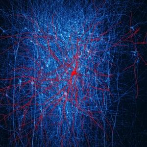 Nanowires that mimic neurons developed
